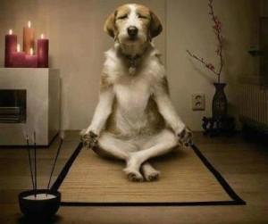 Dog-meditating--300x251