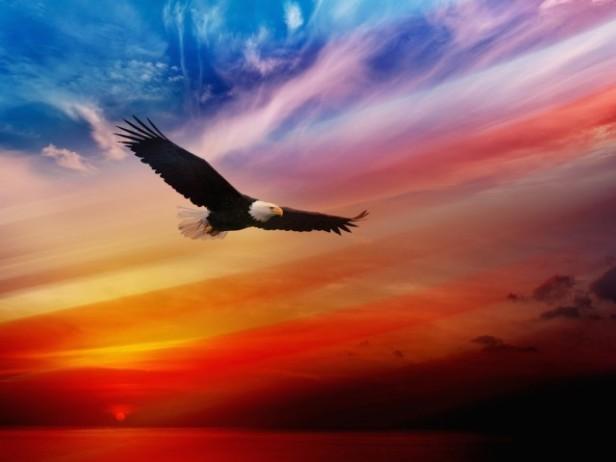 eagle 7
